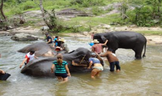 elephant care on a one day Chiang Mai trek