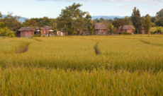 rice paddies on 2 day Pai tour